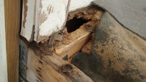 wood rot repair in raleigh